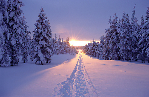 beautiful, forest, nature, sky, snow, sun, trees, winter