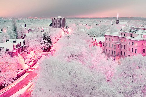 beautiful, pink, scenery, winter