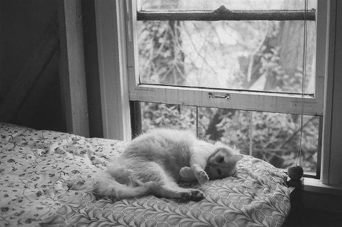 bed, bedroom, black and white, cat, cute, kitty, window