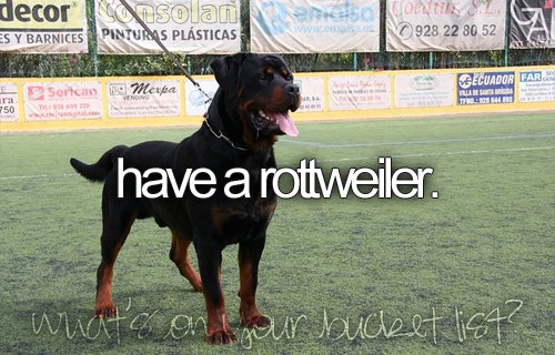 before i die, beforeidie, bucket list, bucketlist, dog