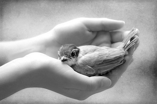 bird, black and white, cute, hands, kindness