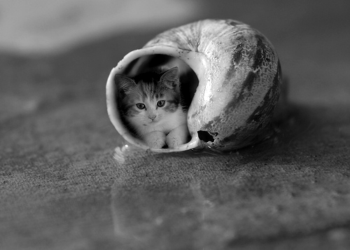 black and white, cat, cute, shell