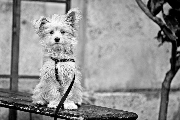 black and white, cute, dog, europe, italy, photography, puppy, rome