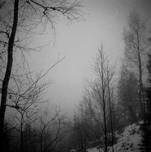 black and white, forest, landscape, sky, snow, trees, vintage, winter, woods