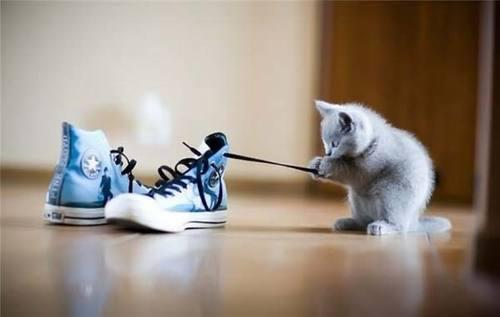 blue, cat, cute, shoe