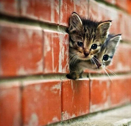 brick wall, cats, cute, kittens