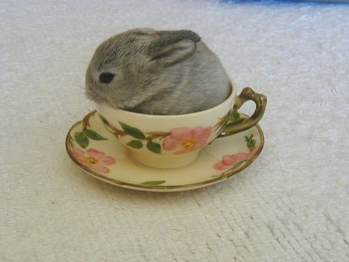 bunny, cute, flowers, rabbit, tea cup