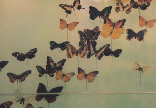 butteflys, butterfly, light, photo, photography