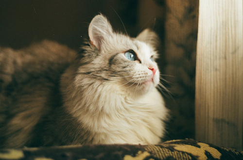 cat, colors, cute, eyes, lovely