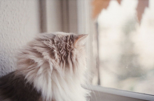 cat, curtain, cute, house, interior, landscape, nature, view, vintage, window, windows