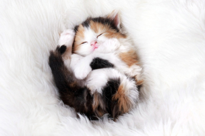 cat, cute, wonderfull