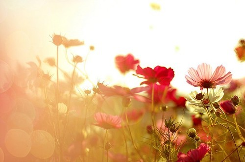 colours, flores, flowers, sun