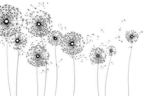 Cute dandelion drawn flowers illustration