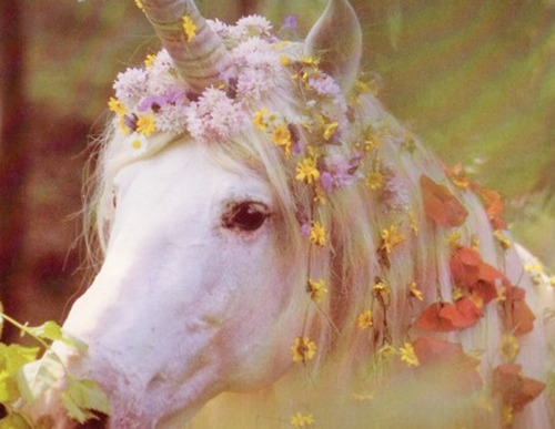 flowers, horse, unicorn