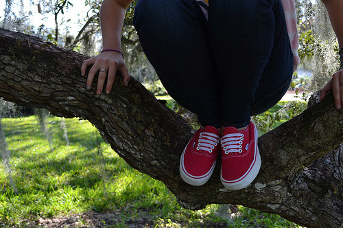 nature, photography, shoes, tree, vans