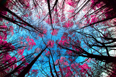 photography, pink, sky, trees